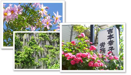 事務所前に咲く花